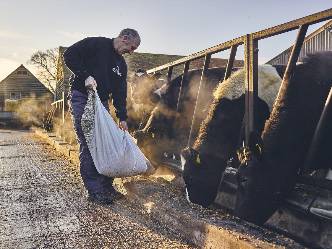 firebird brewery man feeding cows