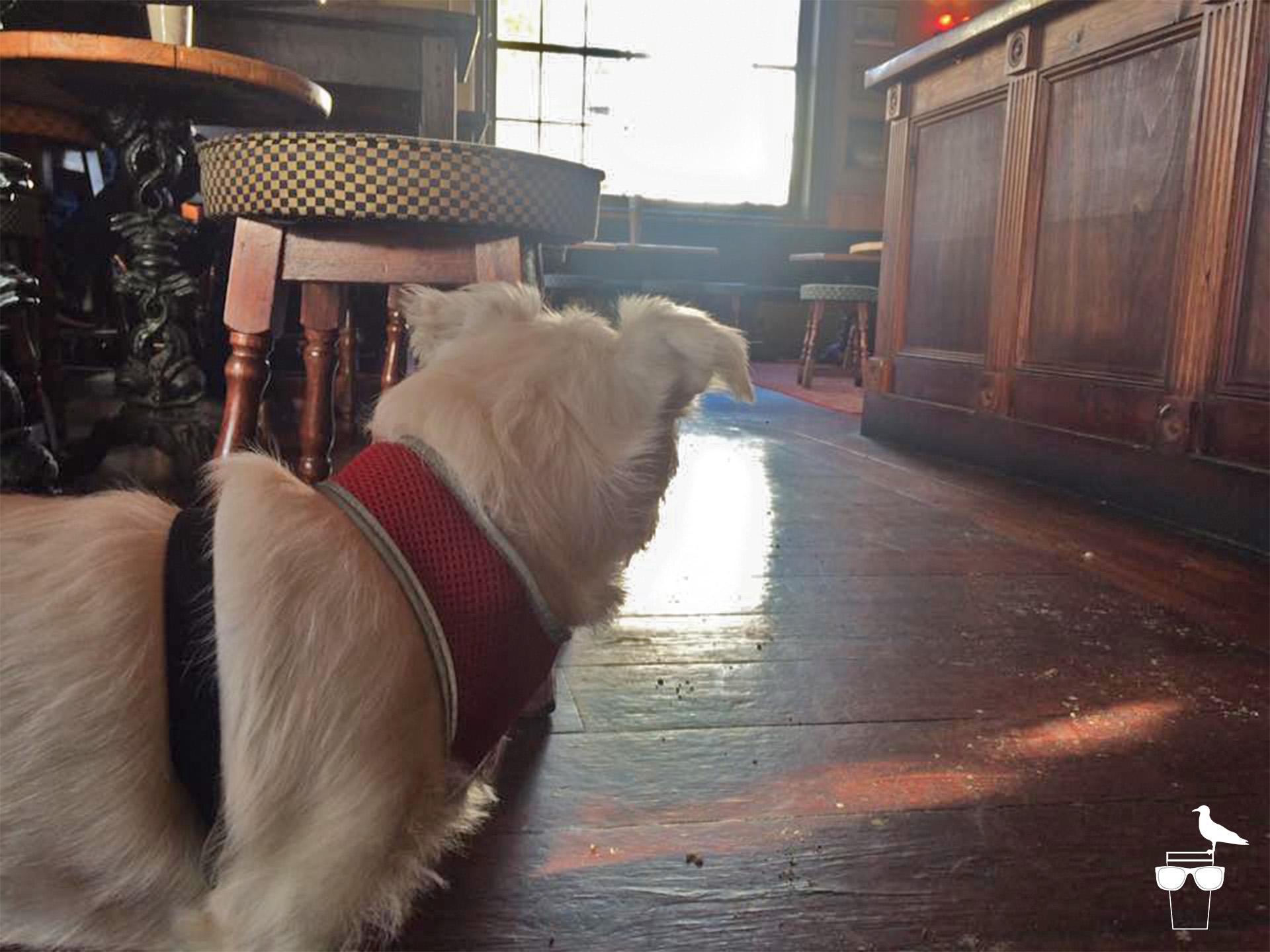 preston park tavern brighton dog